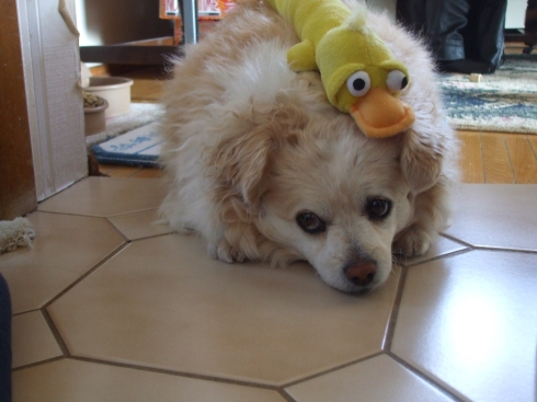 Muffit and duck