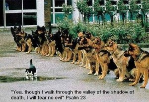 Cat-Teasing-Dogs