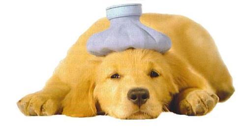 sick_puppy