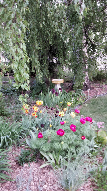 flowergarden201505