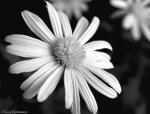 bwflower