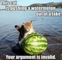 cat_pushing_watermelon_argument_invalid