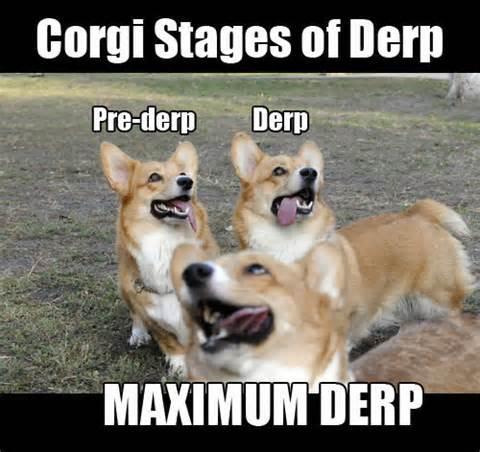 corgiderp