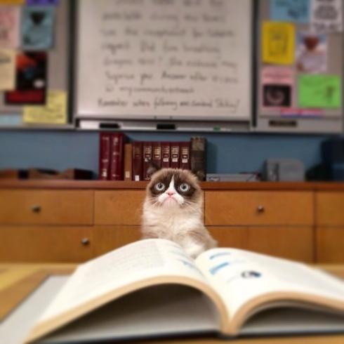 grumpycatschool