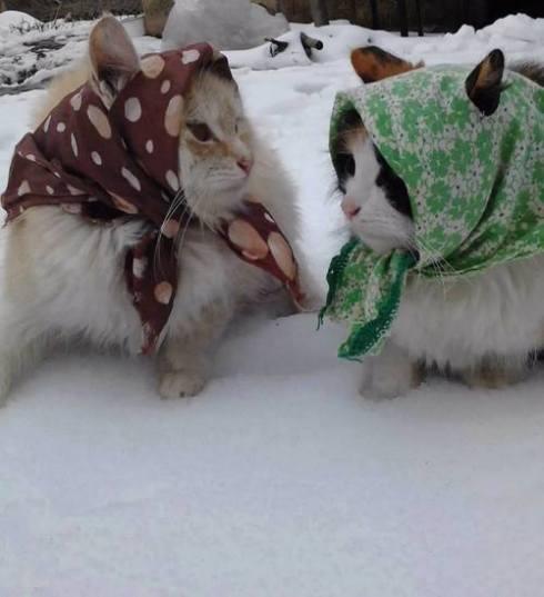 babushkacats
