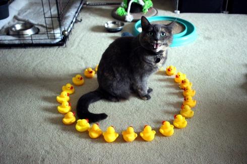 catbadday