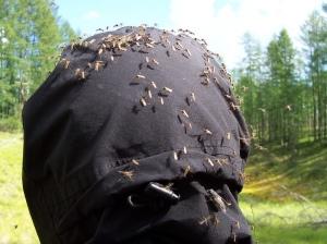 bughead