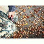 autumnbirks1